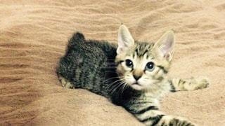 猫の写真・画像素材[36255]