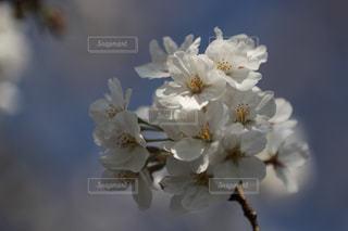 近くの花のアップの写真・画像素材[1119830]