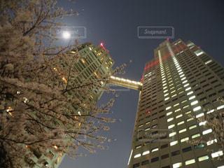 桜咲く月明かりの写真・画像素材[1119831]