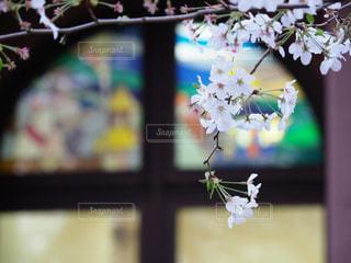 近くの花のアップの写真・画像素材[1119838]