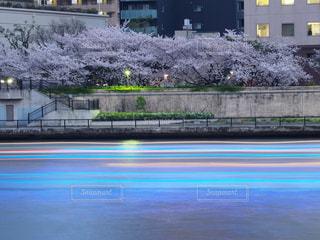 隅田川の桜の写真・画像素材[1119839]