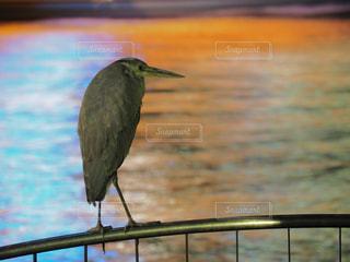水の体の横に鳥立っての写真・画像素材[1121480]