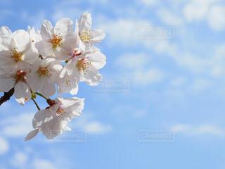 近くの花のアップの写真・画像素材[1121482]