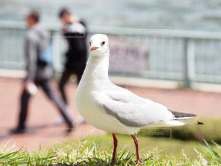 フェンスの前に小さな白い鳥立つの写真・画像素材[1121484]