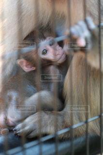 近くに猿のアップの写真・画像素材[1127165]