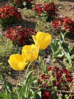 花壇の春の写真・画像素材[1121553]