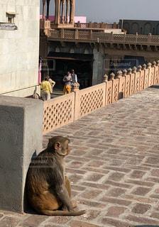 インドのお猿さんの写真・画像素材[1181999]