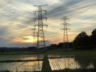 水田に映る夕陽の写真・画像素材[1193866]