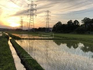 5月の水田の写真・画像素材[1193867]