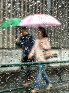 梅雨の中での写真・画像素材[1236771]