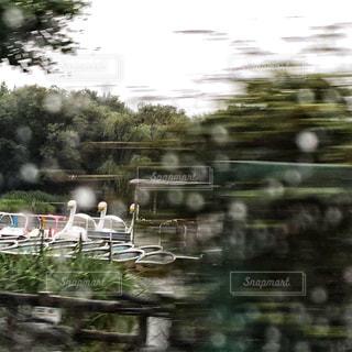 ボート池にての写真・画像素材[1238772]