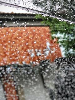 初夏の雨粒の写真・画像素材[1263182]