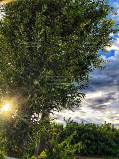 秋の訪れの写真・画像素材[1391084]