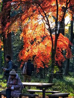 秋色の写真・画像素材[1393294]