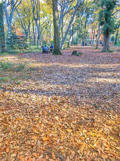 林の中の写真・画像素材[1393297]