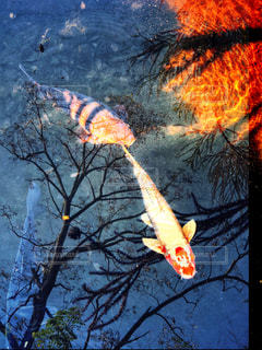 水中の写真・画像素材[1640178]