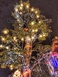 夜ライトアップされたクリスマス ツリーの写真・画像素材[1640239]