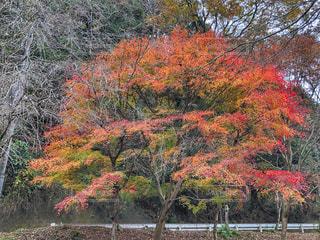 山道の紅葉🍁の写真・画像素材[1674504]