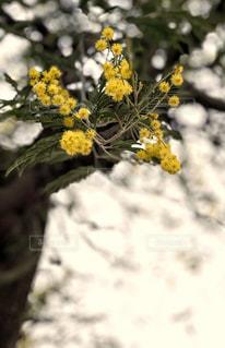 花の写真・画像素材[1854489]