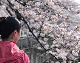 平成最後の4月の写真・画像素材[1988013]