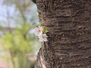 春の写真・画像素材[1988033]