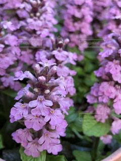 春の庭の写真・画像素材[2056917]