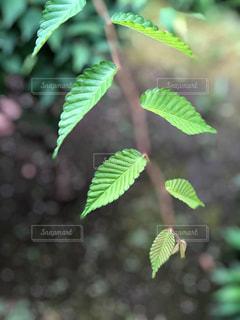 庭木の写真・画像素材[2259488]