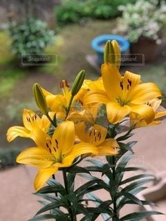 黄色の写真・画像素材[3299953]