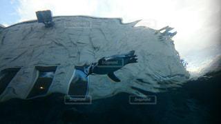 泳いでるペンギンの写真・画像素材[1120115]