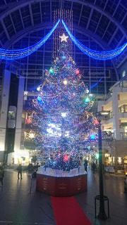 クリスマスツリーの写真・画像素材[1120116]