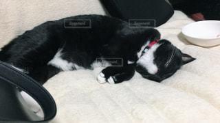 ベッドの上で横になっている黒い猫の写真・画像素材[1446150]