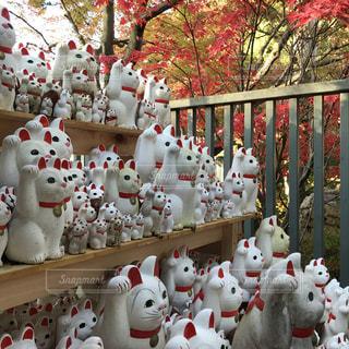 紅葉の屋外においてある複数の招き猫の写真・画像素材[1106120]