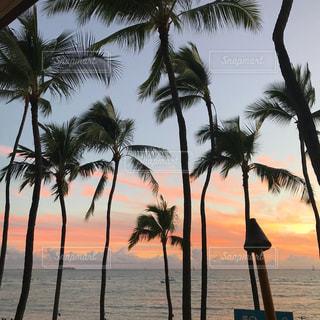 ヤシの木と夕暮れのビーチの写真・画像素材[1106122]