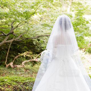 白いウェディングドレスを着た女性の後ろ姿の写真・画像素材[1108267]