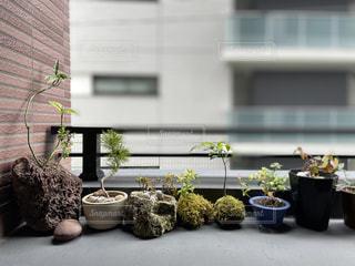 ベランダに並んだ観葉植物(盆栽)の写真・画像素材[3254584]