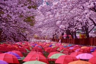 カラフルな傘の写真・画像素材[1120695]