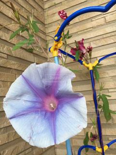 青と白の傘の写真・画像素材[2353708]