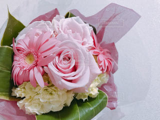 植物にピンクの花の写真・画像素材[1120879]