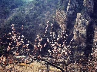 背景の山と木の写真・画像素材[1123139]