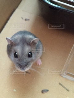 動物の写真・画像素材[36288]