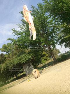 凧の飛行人の写真・画像素材[1121308]