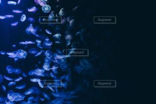 クラゲの写真・画像素材[1135168]