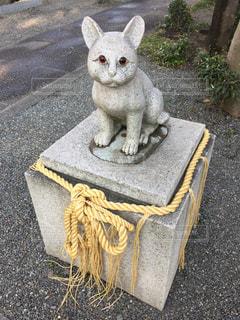 阿豆佐味天神社の狛猫の写真・画像素材[1127228]