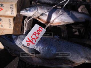 市場の鮭の写真・画像素材[1127230]