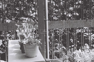 庭園の人々 のグループの写真・画像素材[1122959]