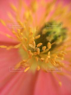 近くの花のアップの写真・画像素材[1122973]