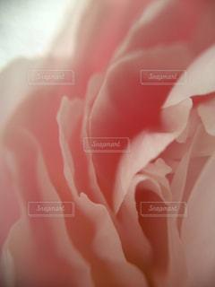 近くの花のアップの写真・画像素材[1122979]