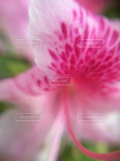 近くの花のアップの写真・画像素材[1122998]