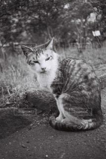 地面に座っている猫の写真・画像素材[1123000]