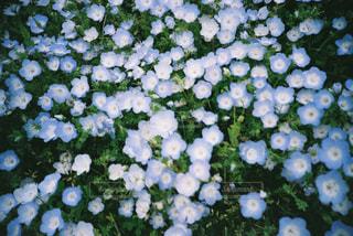 近くの花のアップの写真・画像素材[1123004]